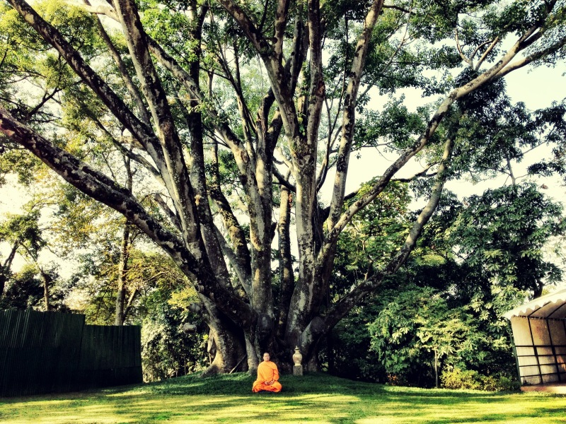 Bodhi Tree used during the little buddha filming